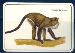 1987 Pocket Calendar Calandrier Calendario Portugal Animais Selvagens Macacos Monkeys Mono Singe Macaco De Brazza - Calendars