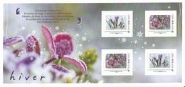 Collector Hiver _ Fleurs - Crocus - Cerisier à Fleur Okame - Collectors