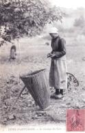 63 - Puy De Dome - Types D Auvergne - Le Gaulage Des Noix - Agriculture - 1906 - Zonder Classificatie