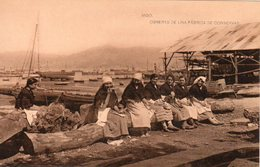 Vigo Conserverie De La Sardine - Pontevedra