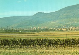 BARR....vue Panoramique   Edit Marasco - Barr