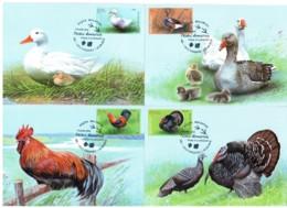 "Moldova 2018 ""Domestic Birds"" Set Of 4 Maxicards. Quality:100% - Moldavie"