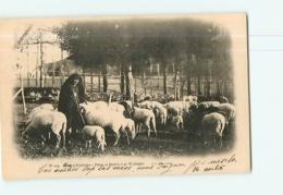 Les PYRENNEES - Lot De 5 CPA : Bergères Et Bergers , Moutons , Brebis Chiens De Montagne - 5 Scans - France