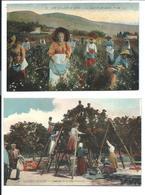 Un Lot De 2 Cartes Anciennes Colorisées - Cueillette Du Jasmin Et Fleur D'Oranger - Vente Directe X - Flowers