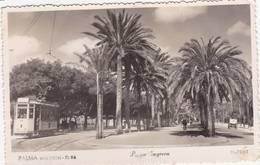 43305 -   Palma  Majorca  Paseo  Sagrera -  Tram - Mallorca