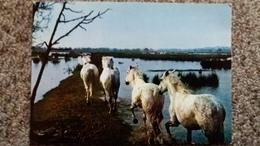CPSM CHEVAL CHEVAUX LA CAMARGUE PAYS DE CIEL BLEU ET DE MIRAGES CHEVAUX ET TAUREAUX SAUVAGES DS LES MARAIS - Horses