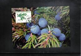 Groenland 2013 Medicinal Plants Maximumcard - Heilpflanzen