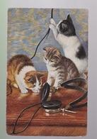 2 Cp :  Une Carte écrite Et Une Carte Vierge   Chiens  Et Chats - Cats