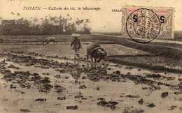 CARTE DU TONKIN CULTURE DU RIZ LE LABOURAGE - Viêt-Nam