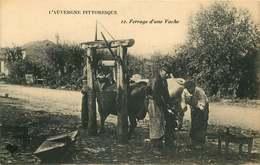 CANTAL  L' Auvergne  PITTORESQUE  Ferrage D'une Vache - France