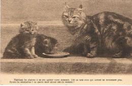 Chats - Kitten, Cats -  Kleine  Katzen- 3 Poesjes En Melk - Chats