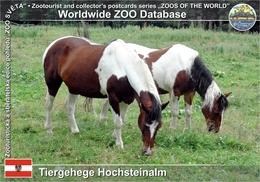 833 Tiergehege Hochsteinalm, AT - Criollo Horse (Equus Ferus F. Caballus) - Gmunden