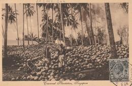 Singapore - Coconut Plantation - Singapour