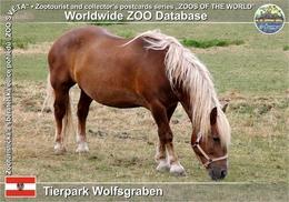 868 Tierpark Wolfsgraben, AT - Noriker Horse (Equus Ferus F. Caballus) - St. Pölten