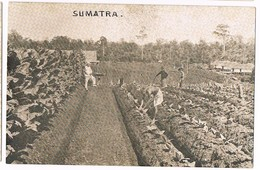 INDONESIE - SUMATRA - INDES NEERLANDAISES - LOCAUX AU TRAVAIL AU CHAMPS ET COLON - Indonesia