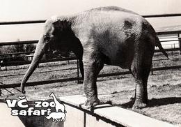 ZOO Dvur Kralove, CZ - Asian Elephant (Elephas Maximus) - Tchéquie