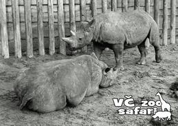 ZOO Dvur Kralove, CZ - Eastern Black Rhinoceros (Diceros Bicornis Michaeli) - Tchéquie
