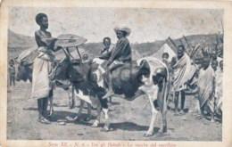 Eritrea - Missione Cattolica Asmara - Indigene - Tra Gli Habab - Le Vacche Del Sacrifizio - Erythrée