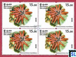Sri Lanka Stamps 2020, Wild Species Threatened, Urchin, Marine, MNH - Sri Lanka (Ceylon) (1948-...)