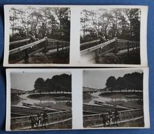 2 Photographie Stéréoscopique Originale 1924 Strasbourg Forêt De Fuchs Am Buckel Pont De Hekel ? - Photos Stéréoscopiques
