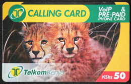 Geparden-Telefonkarte Aus Kenia 50 KShs - Expiring Date 16,07.2009 - Kenia