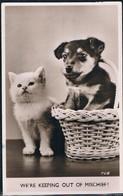 Chat Et Chien  -cat Dog- Poes Hond -katzen Hunde - Chats