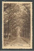 Oude Postkaart. WESTERLOO.  Beeltjensdreef - Westerlo