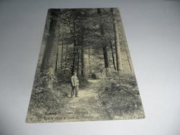Kluisbergen:ruyen Route Dans Le Bois De L'enclus (environs D'orroir) - Kluisbergen