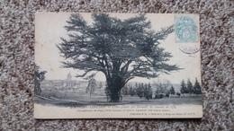 CPA MONTIGNY LENCOUP CEDRE PLANTE PAR BERNARD DE JUSSIEU EN 1734 ARBRE GEANT ED SIMONET 1905 - Trees