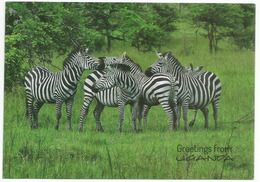 Zébres D'Ouganda (UGANDA) Lake Mbura National Park. Edition Wildlife Friends, écrite Au Verso - Ouganda