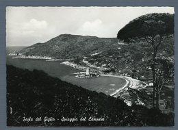 °°° Cartolina - Isola Del Giglio Spiaggia Del Campese Nuova °°° - Grosseto