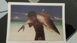 CSM - Maldives -  Requin à Pointe Blanche - Maldives