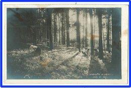 24948  CPA  La Cueillette Des Brimbelles Dans Les Vosges  ( Myrtilles ) Photo Jové ,la Neuville Les Raon !! ACHAT DIRECT - Autres Communes
