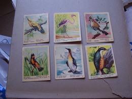 Lot Chromos Images Vignettes Val Gum *** Oiseaux - Birds *** - Albums & Catalogues