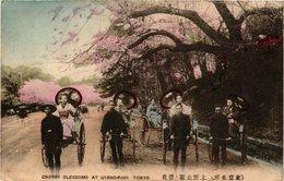 CPA AK TOKYO Cherry Blossom At Uyeno Park JAPAN (609034) - Tokyo