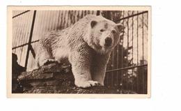 QUEBEC CITY, Canada, Polar Bear, Zoological Garden, 1971 WB Postcard - Québec - Les Rivières
