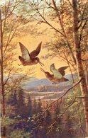 Oiseaux - Bécasses - Cachet Blois Quai De La Saussaye - Loir Et Cher 1905 - Oiseaux