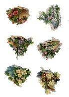 Lot De Chromos Découpis, 6 Parapluies - Fleurs