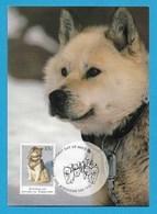 Australian Antarctic Territory 1994 Mi.Nr. 100 , The Last Huskie - Maximum Card - First Day Of Issue 13 January 1994 - Maximum Cards