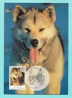 Australian Antarctic Territory 1994 Mi.Nr. 98 , The Last Huskie - Maximum Card - First Day Of Issue 13 January 1994 - Maximum Cards