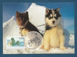 Australian Antarctic Territory 1994 Mi.Nr. 101 , The Last Huskie - Maximum Card - First Day Of Issue 13 January 1994 - Maximum Cards