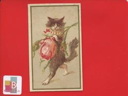 Joli Chromo Anthropomorphisme Chat Rose Style Louis Wain - Other