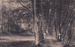 Tervueren, Avenue Des Charmes - Tervuren
