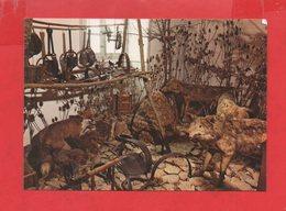 """70 - Champlitte : Musée Demard, """" Les Loups """" - Autres Communes"""
