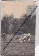 Sermaize Les Bains (51)  Pâturage Sermaizien (vaches Dans Un Près) - Sermaize-les-Bains
