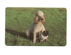 ZAMBIA  - Dog - Zambia