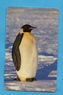 ZAMBIA  - Penguin - Zambia