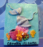 Magnet Cayman Islands - - Animaux & Faune