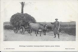 CP 40 - Attelage Landais Transportant L'Ajonc Pour Litière Photo St Pé Mont De Marsan - Zonder Classificatie