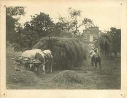 090320 - PHOTO GK BALLANCE FRPS MENTON - 74 EVIAN Récolte Foin Scène Champêtre Paysan - Evian-les-Bains